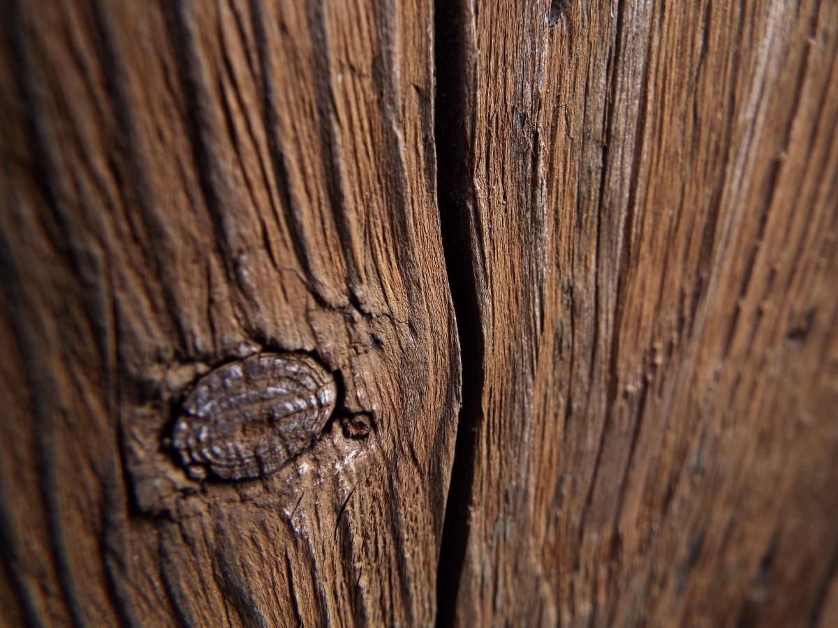 images gratuites arbre branche structure bois texture feuille tronc marron sol bois d. Black Bedroom Furniture Sets. Home Design Ideas