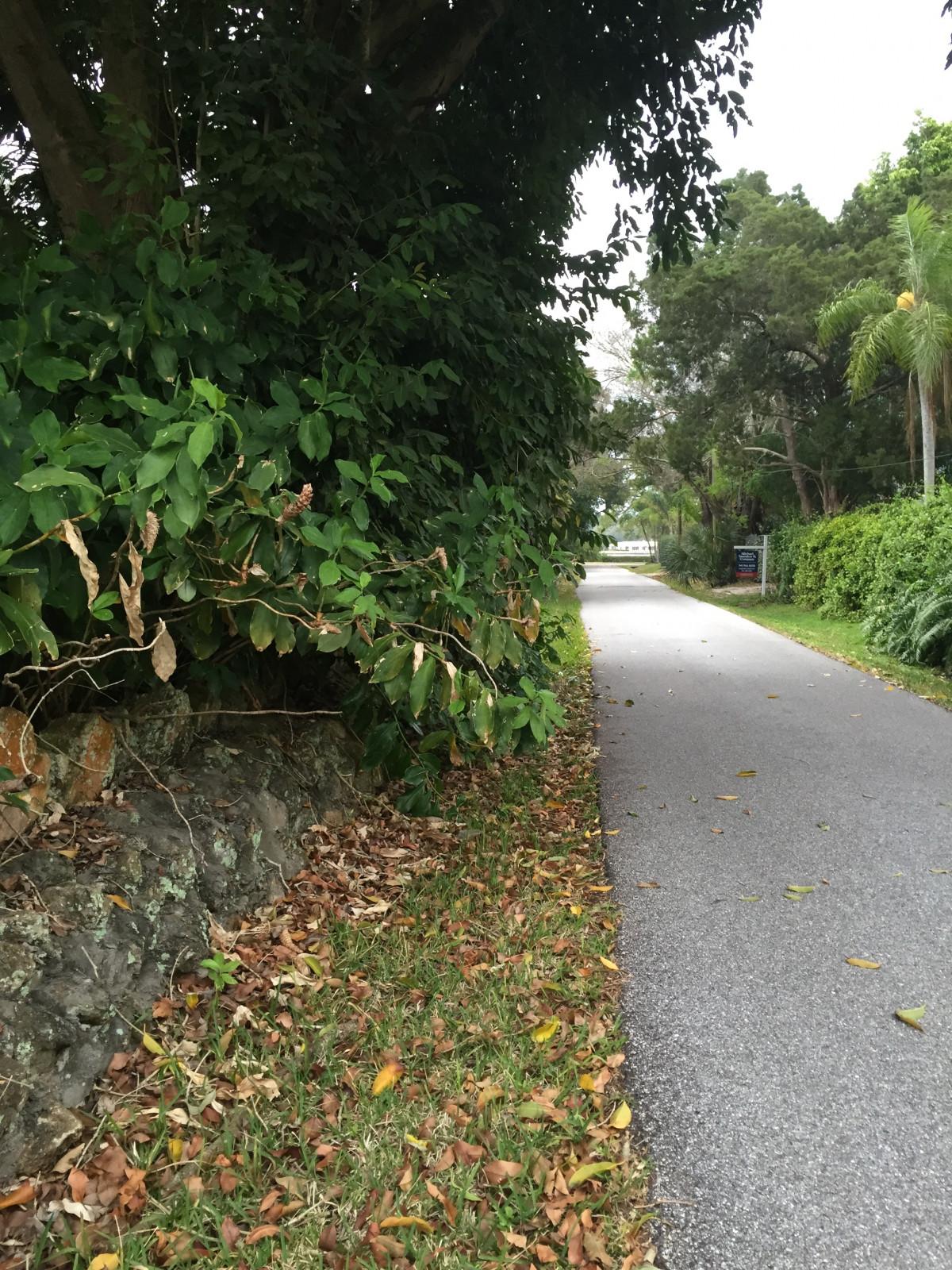 Images gratuites arbre herbe plante pelouse feuille trottoir fleur mur passerelle - Quand planter de la pelouse ...