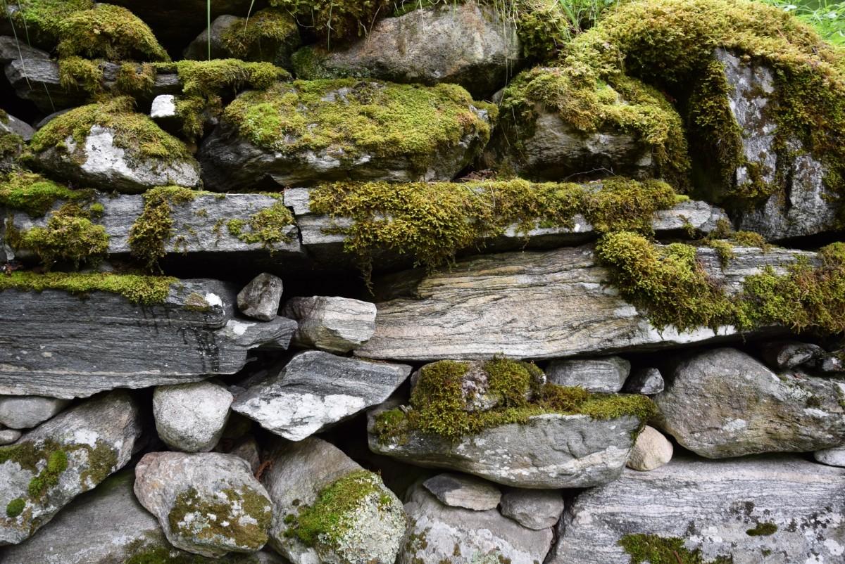 Bakgrundsbilder : gräs, sten, blomma, vägg, grön, trädgård ...