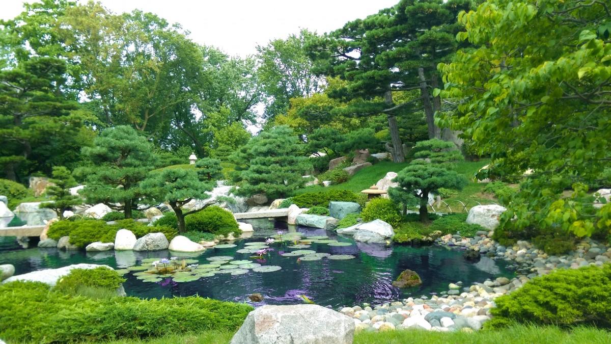 Fotos gratis c sped flor estanque patio interior bot nica paisajismo jard n bot nico - Disenador de jardines ...