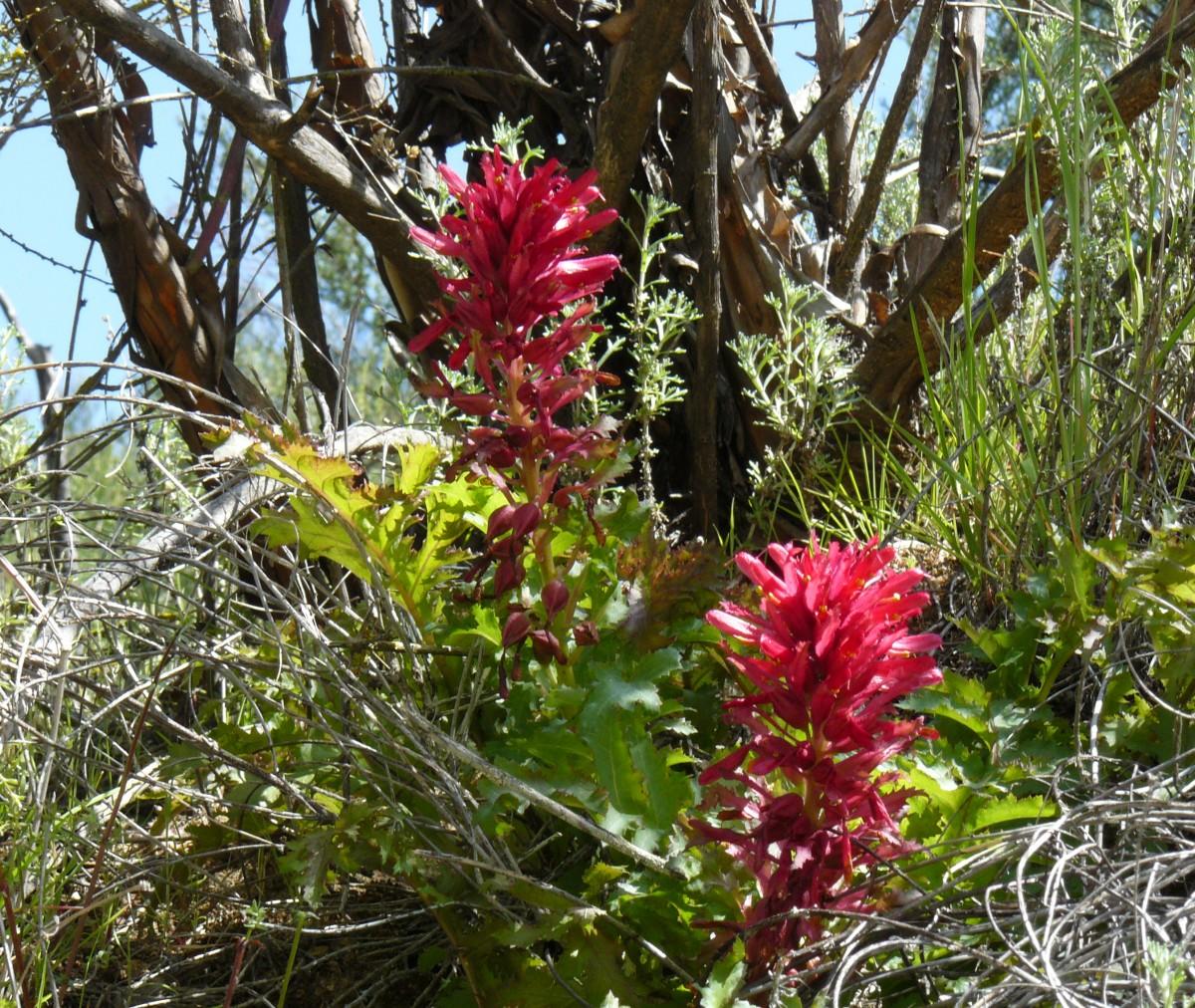 Images gratuites fleur flore fleur sauvage fleurs for Plante jungle