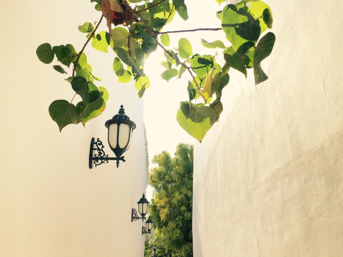 Fotos Gratis : árbol, Rama, Planta, Hoja, Flor, Pared