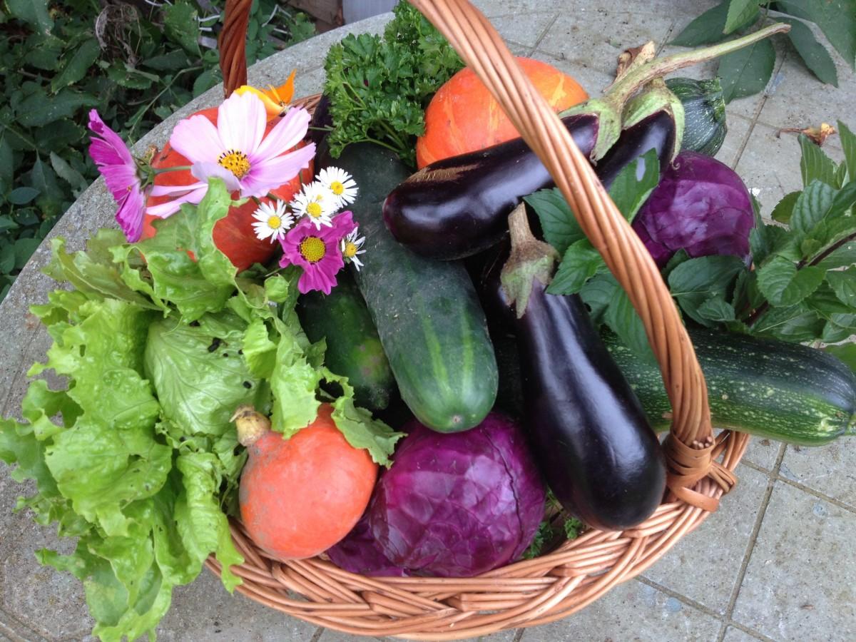 Natur Kosmos Blume Lebensmittel Salat Ernte produzieren Gemüse Kürbis Markt Korb Gemüse Kohl Floristik Aubergine Bio Gemüsegarten blühende Pflanze Blumendesign Blumen arrangement
