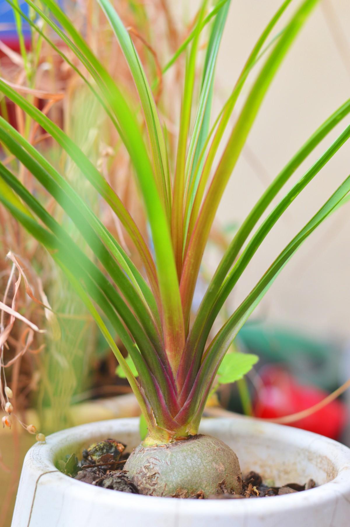kostenlose foto natur pflanze wei blume laub vase gr n kraut zimmerpflanze totes. Black Bedroom Furniture Sets. Home Design Ideas