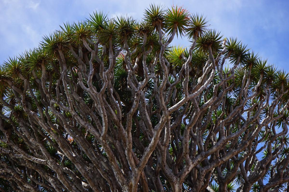 Images gratuites arbre branche feuille fleur mousse for Arbres a feuilles persistantes