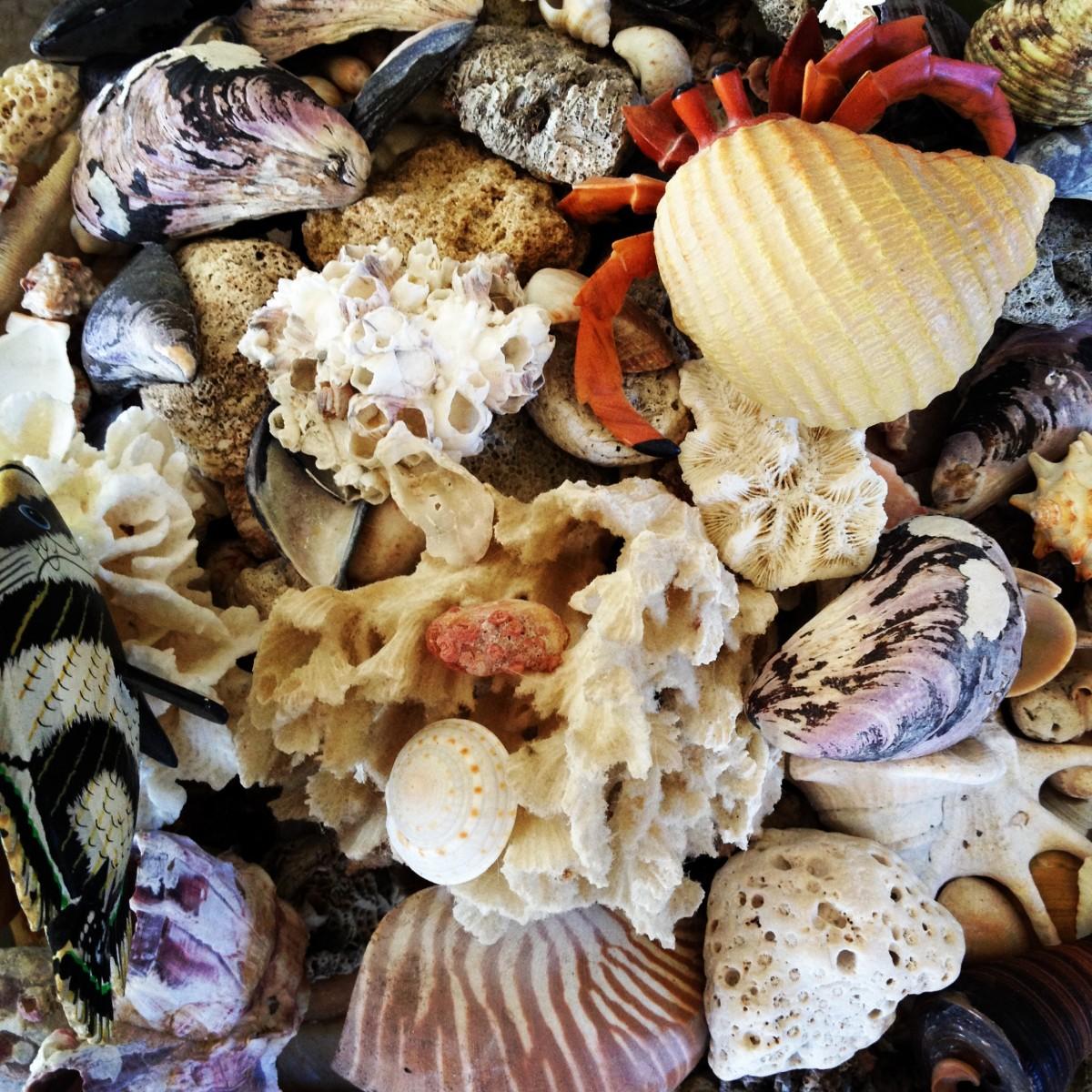 Морские устрицы картинки