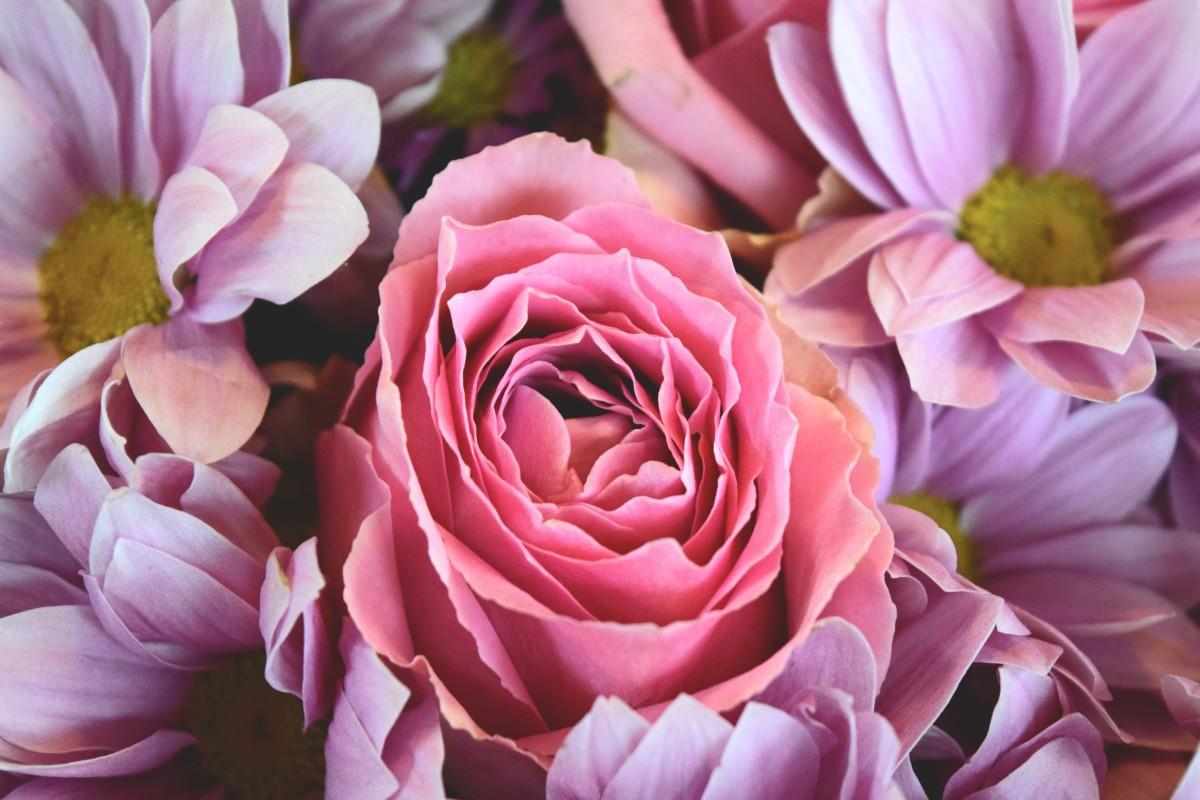 Photograph of a flower
