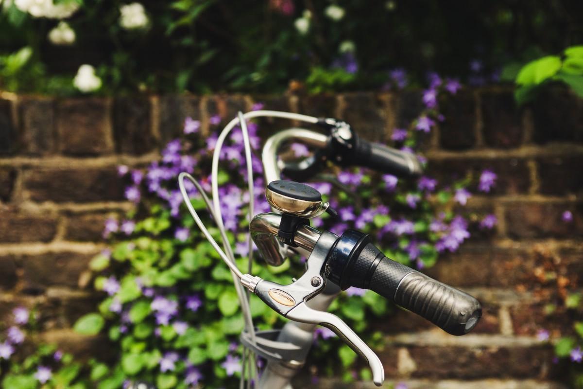 la nature, herbe, lumière, fleur, vélo, bicyclette