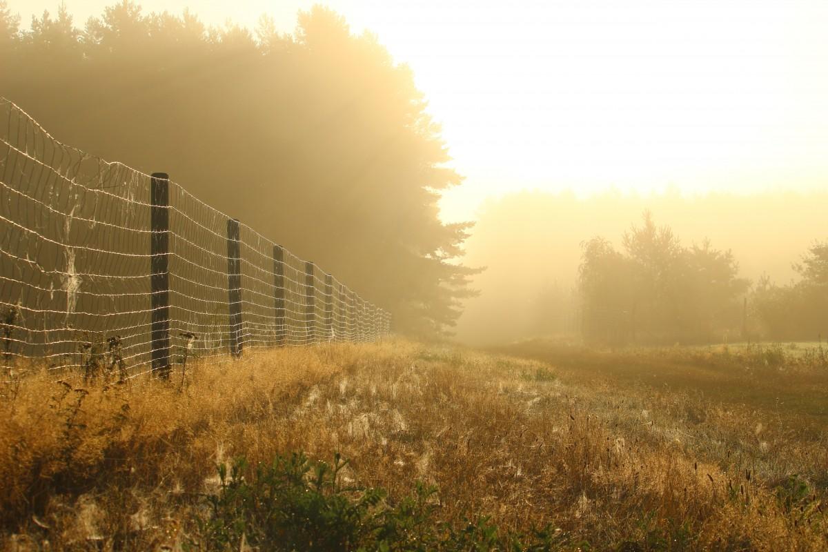 free images   landscape  tree  nature  horizon  fence  sun
