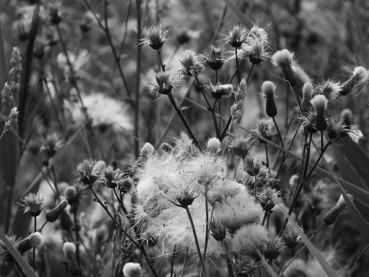 kostenlose foto baum natur wald gras ast schwarz und wei fotografie wiese sonnenlicht. Black Bedroom Furniture Sets. Home Design Ideas