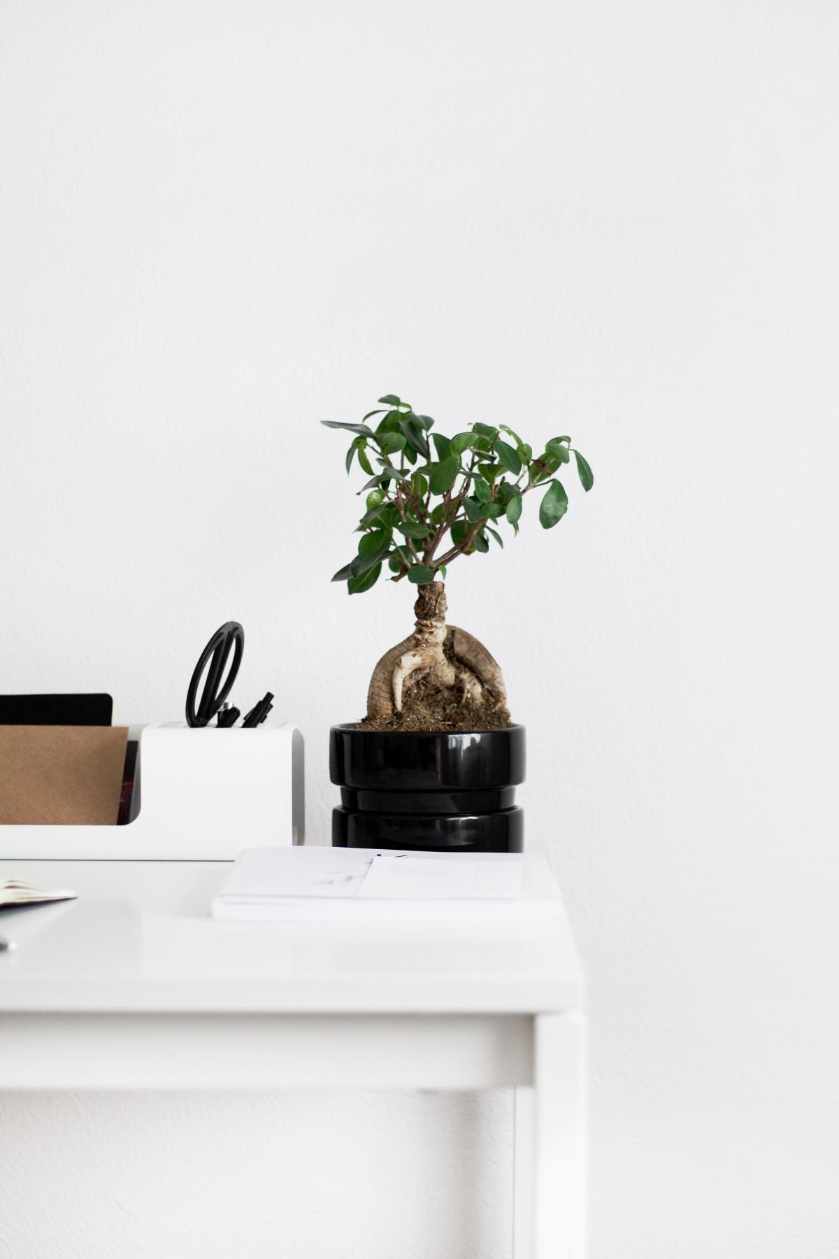 무료 이미지 : 표, 목재, 꽃, 정물, 관엽 식물, 인테리어 디자인 ...