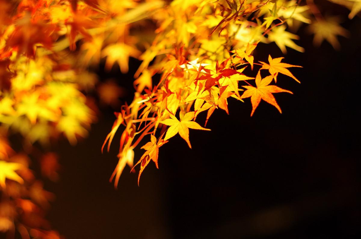 ранних солнце листья желтые очень красивые фото этот день церковь