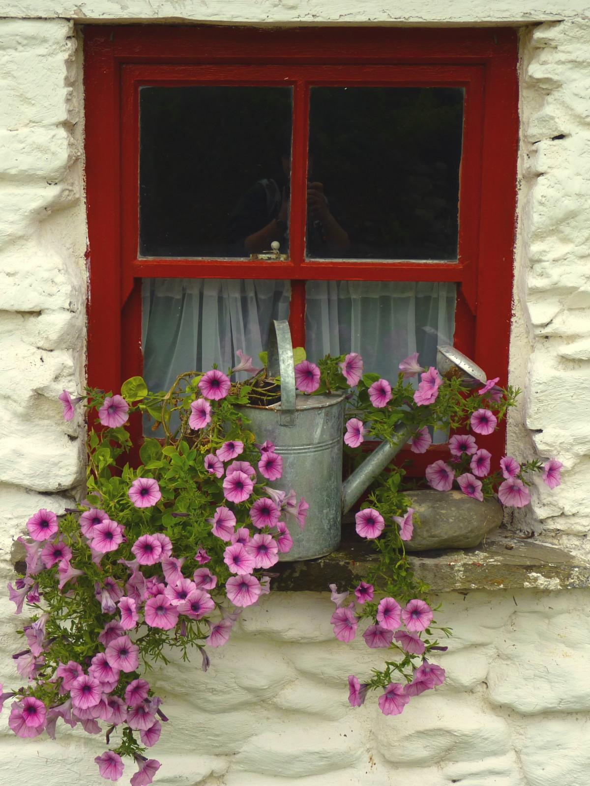 images gratuites plante fleur fen tre fleurs d coration de no l cadre irlande idylle. Black Bedroom Furniture Sets. Home Design Ideas