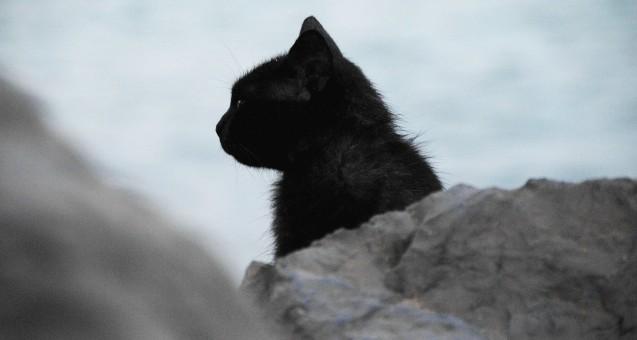 Tier,Katze,katzenartig,Säugetier,schwarze Katze,schwarz