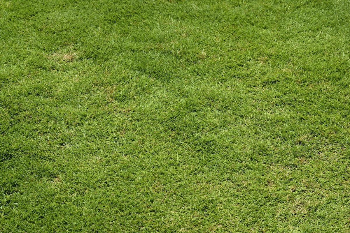 Images gratuites paysage la nature herbe plante champ pelouse prairie feuille fleur - Quand planter de la pelouse ...