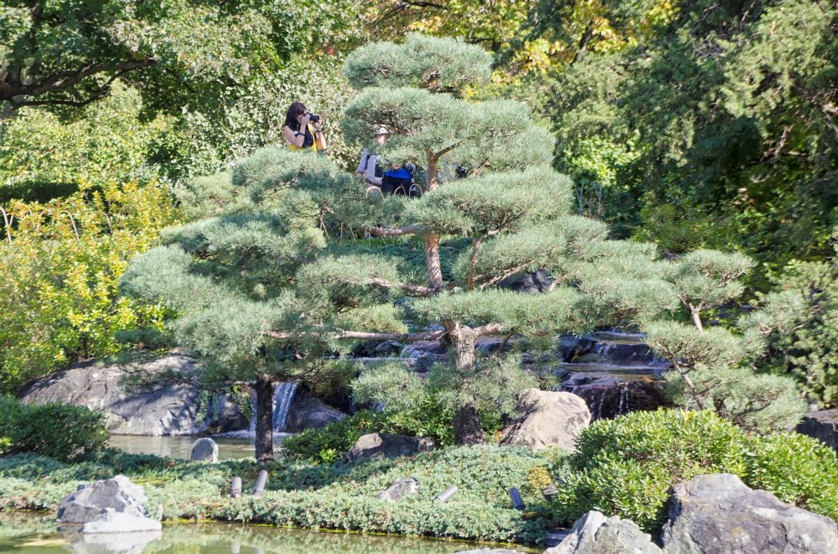 modèle jardin paysager