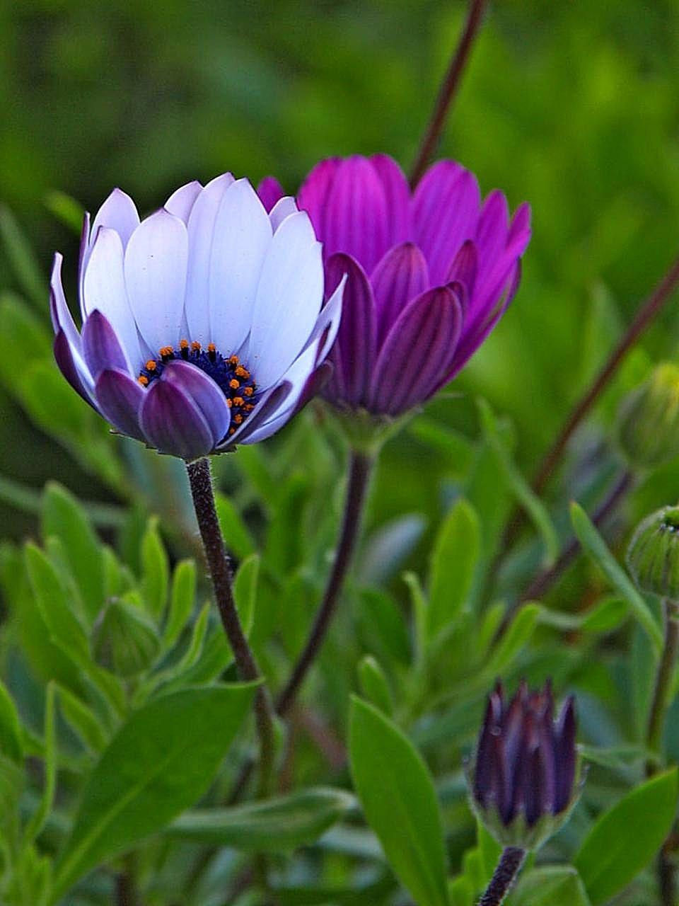 пластины красивые дикие цветы фото мансардных двухскатных