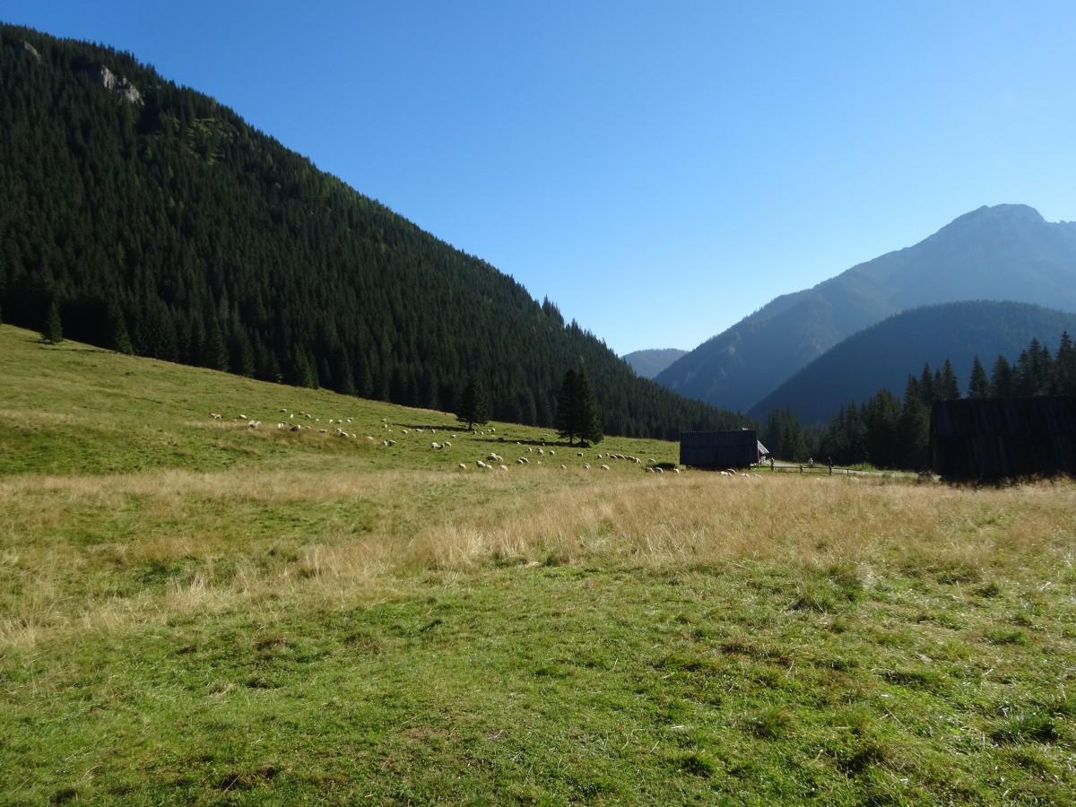 grassland features