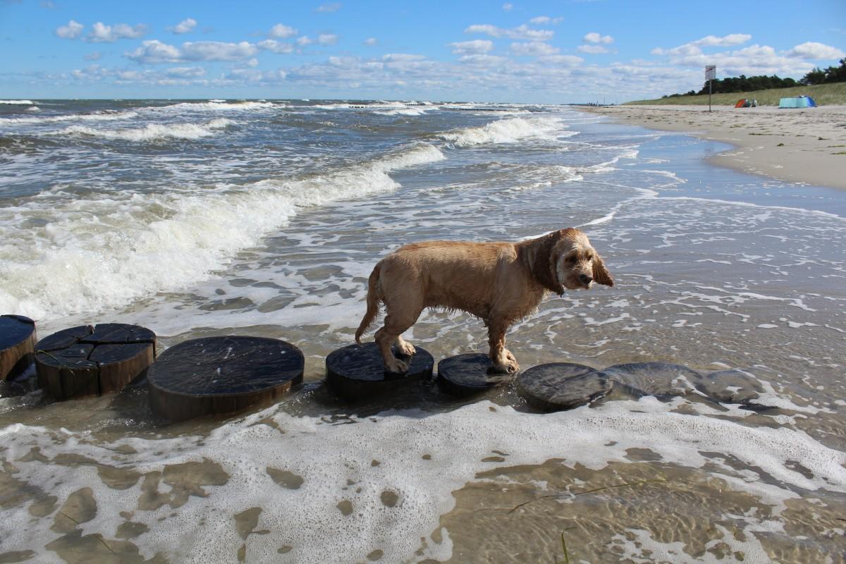 Картинки берег моря с собакой