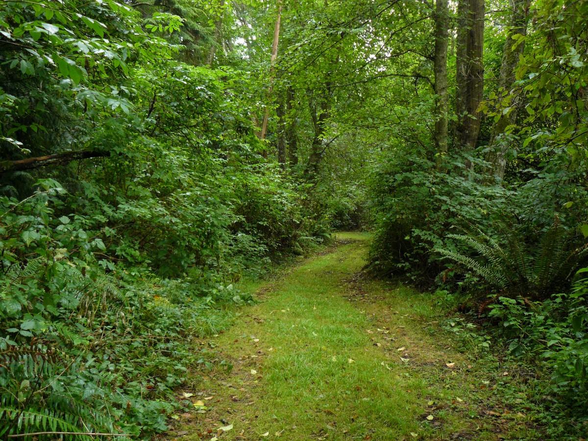 Gambar : pohon, gurun, jejak, padang rumput, rimba, tumbuh-tumbuhan, hutan hujan, gugur, daerah ...