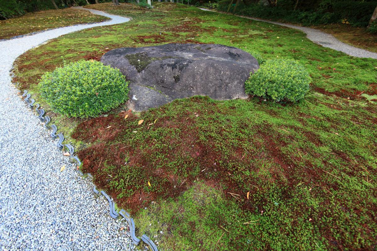 Images gratuites arbre chemin herbe bois pelouse for Plante herbe haute