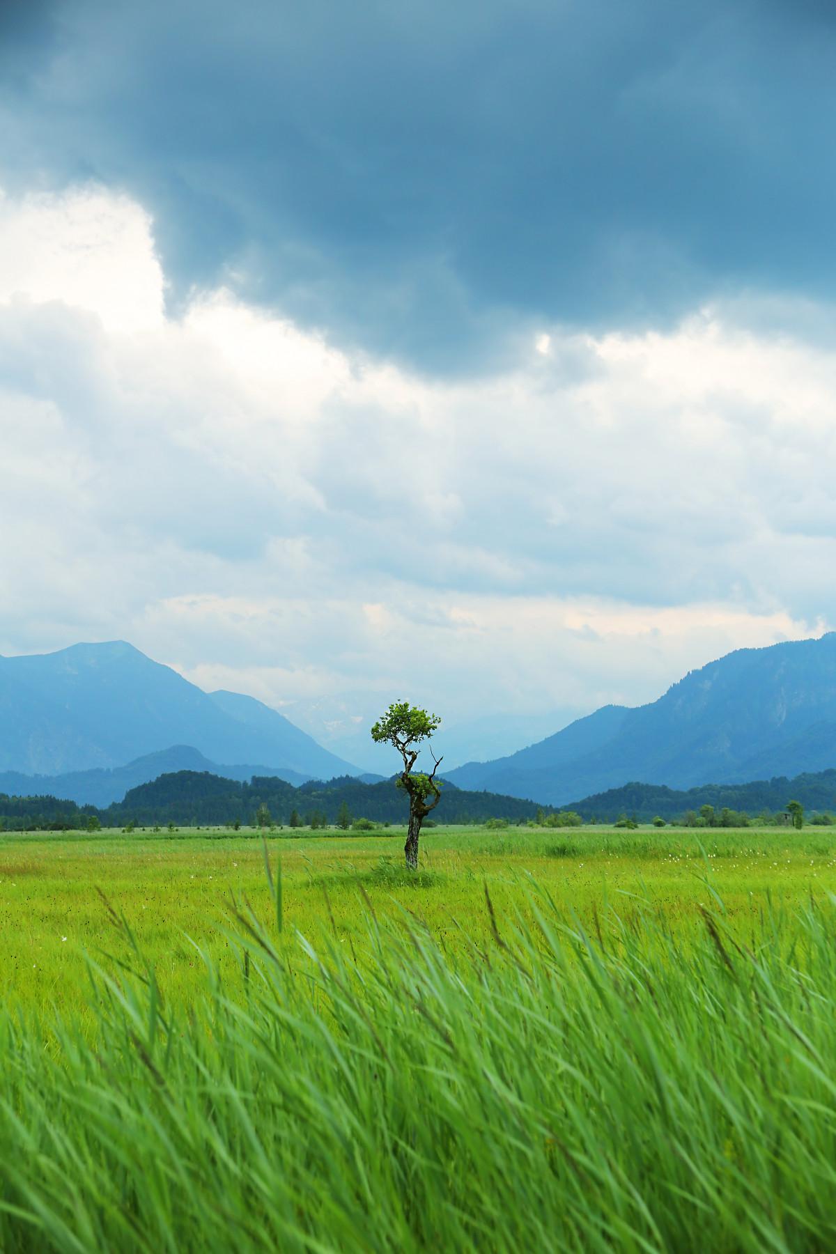 Gambar : pemandangan, hutan, gurun, gunung, bidang, padang ...