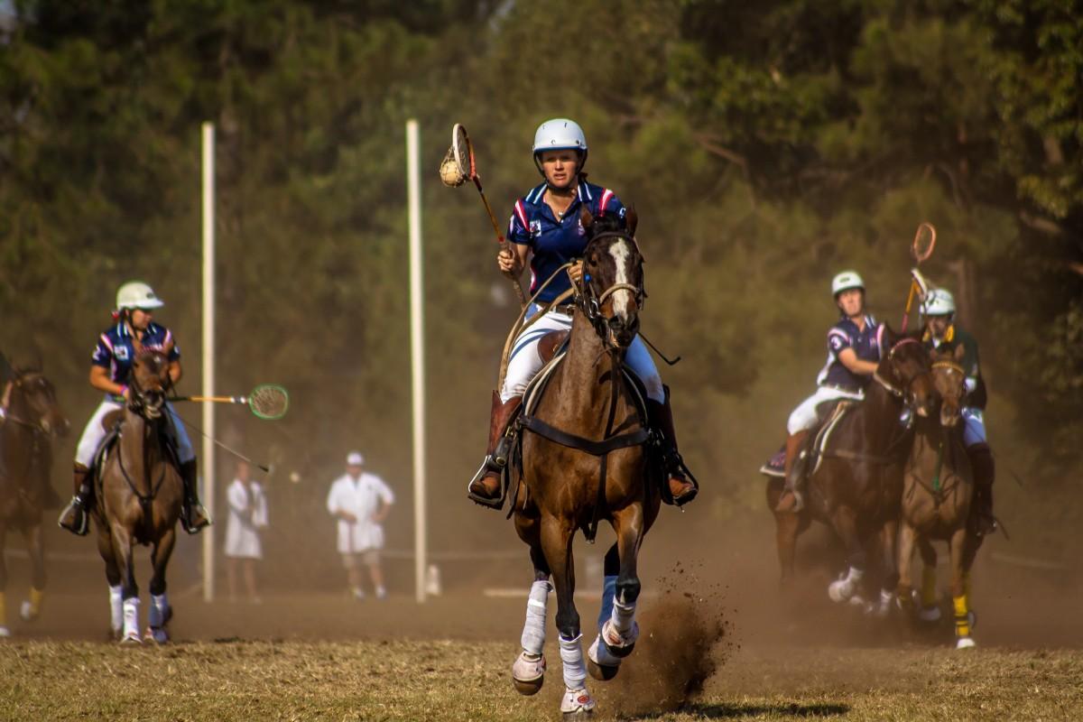 Images Gratuites : compétition, les chevaux, des sports ...