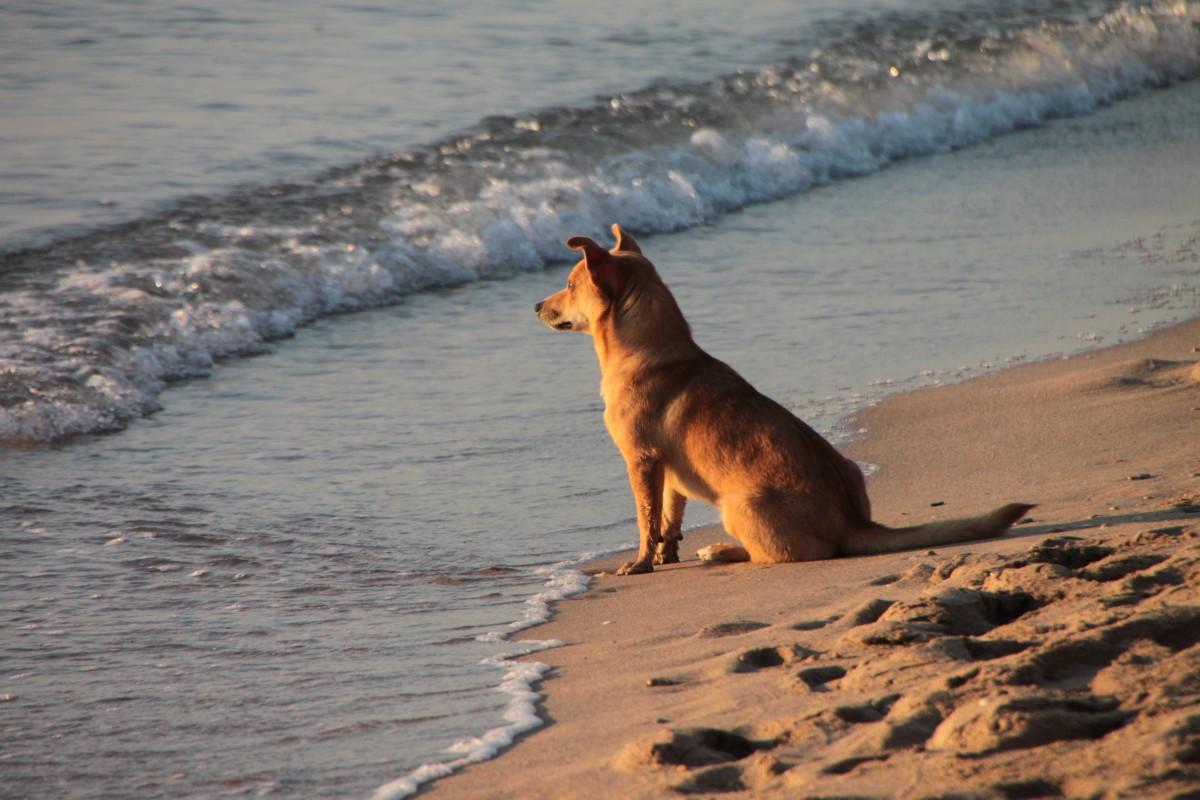 синкерим пляж гоа отзывы и фото туристов