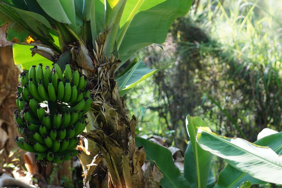 словом, дам фрукты амазонии фото отступали фото американские