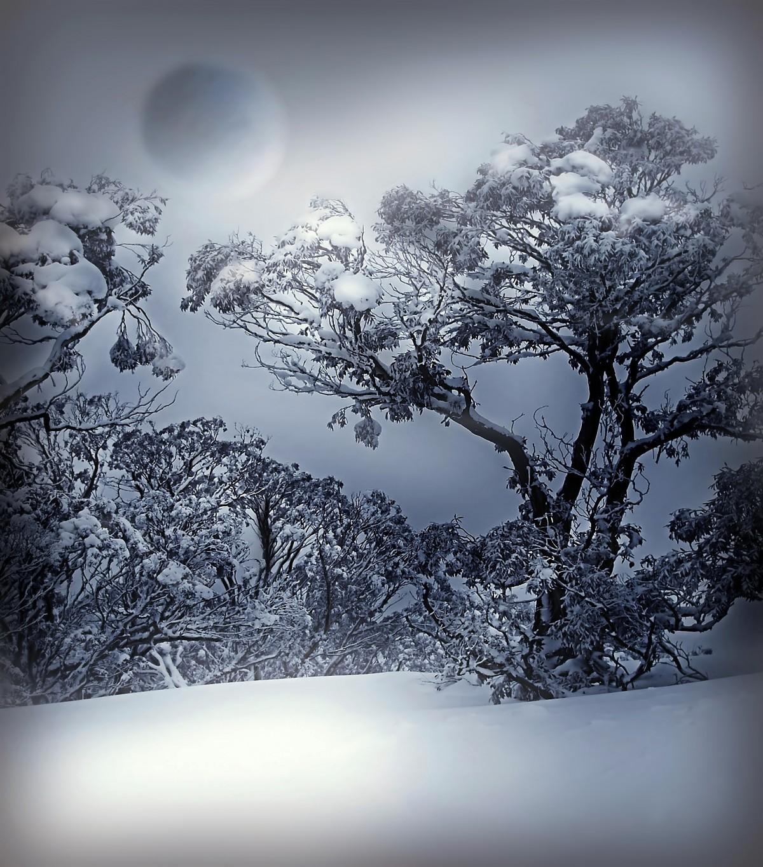 Gambar Pohon Alam Cabang Musim Dingin Menanam Putih Udara