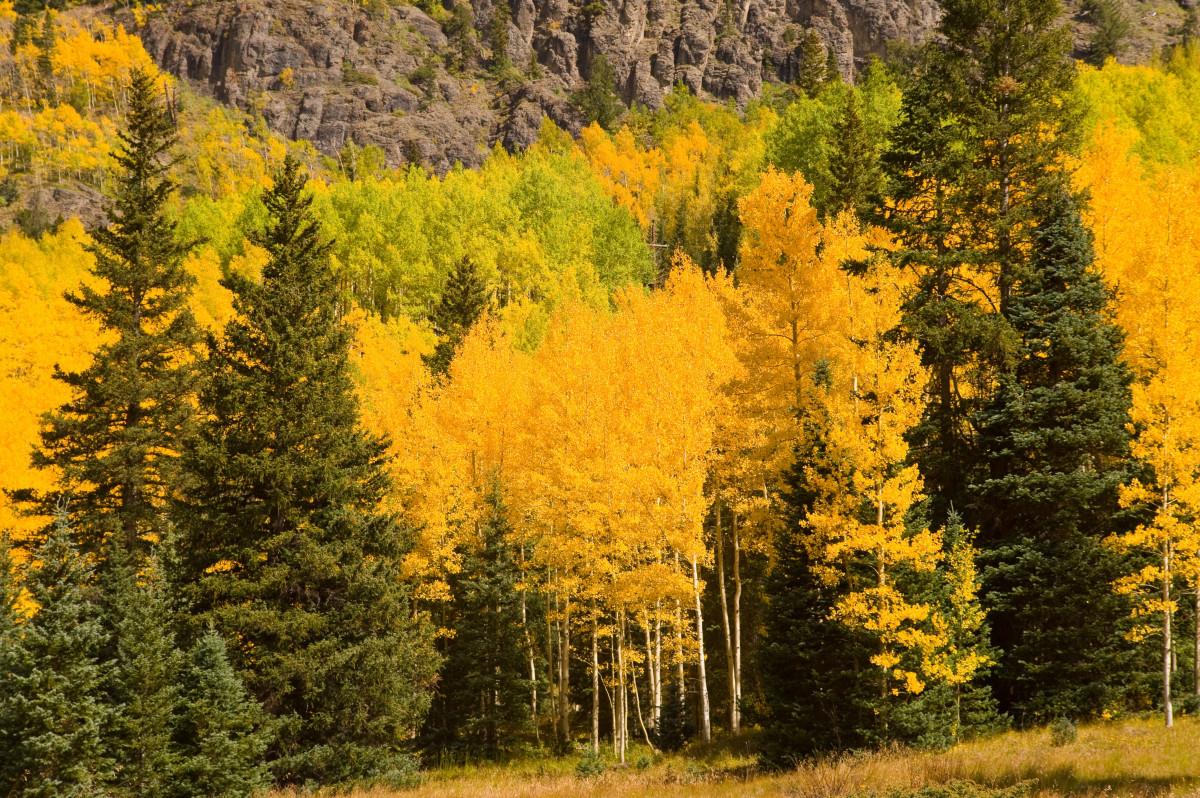 Free Images Landscape Tree Treeline Meadow Prairie