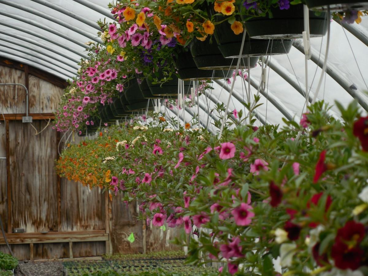 Gratis afbeeldingen bloem decoratie eten herfst achtererf tuin kerstmis broeikas - Decoratie tuin exterieur ontwerp ...