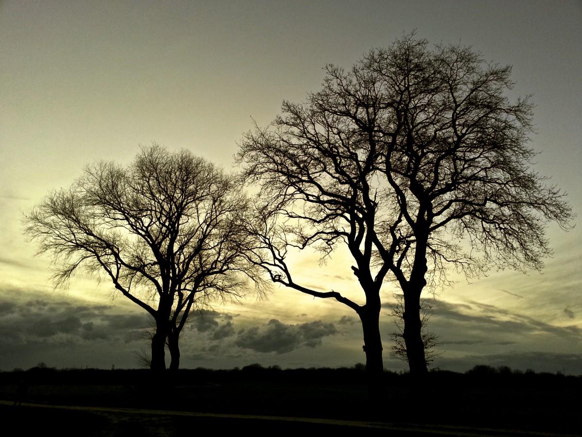 https://c.pxhere.com/photos/26/1b/trees_landscape_nature_mood_light_forest_autumn_sun-1381892.jpg!d