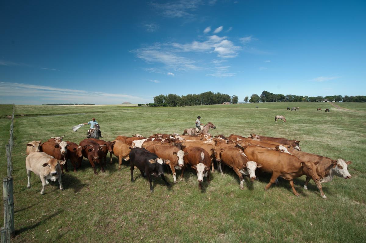 для коров пастбища фото