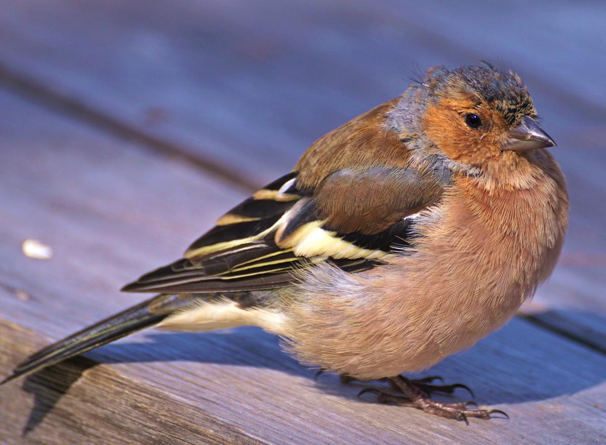 Free Images : nature, animal, wildlife, food, beak ...