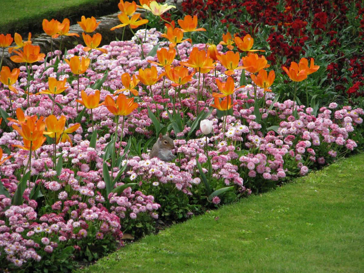Images gratuites pelouse fleur tulipe arbuste parterre de fleurs jardin botanique plante - Planter de la pelouse ...