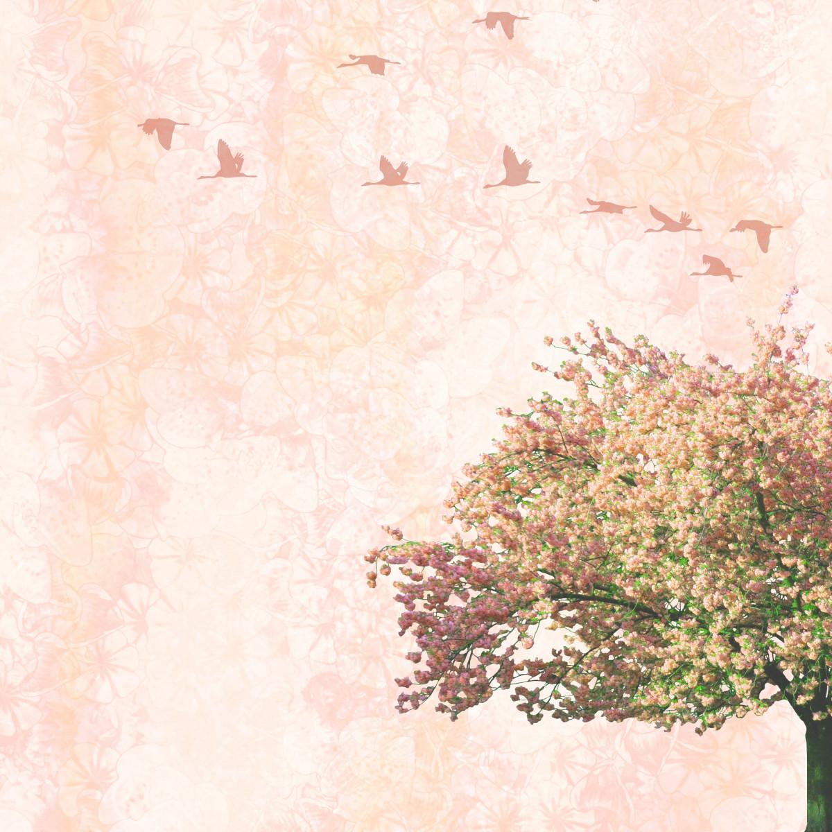 Fotos gratis rbol rama vendimia retro textura flor - Papel pintado ramas arbol ...