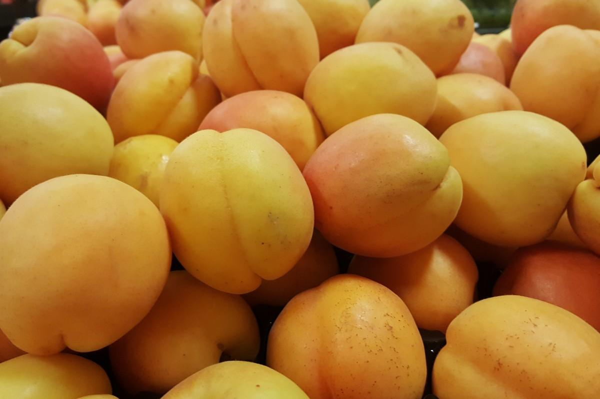 Картинки абрикосов, скуби для