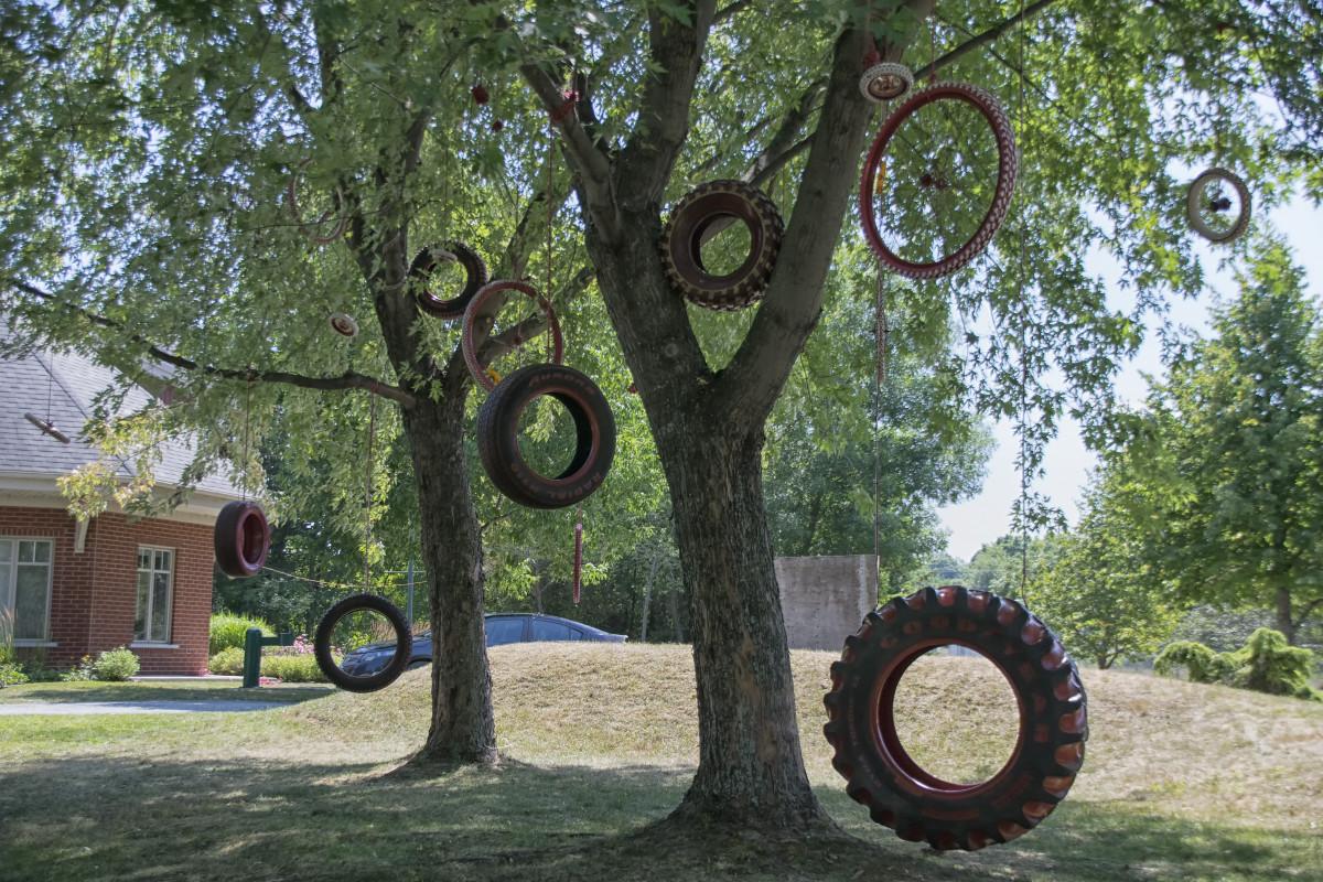 free images tree lawn park backyard garden art canada