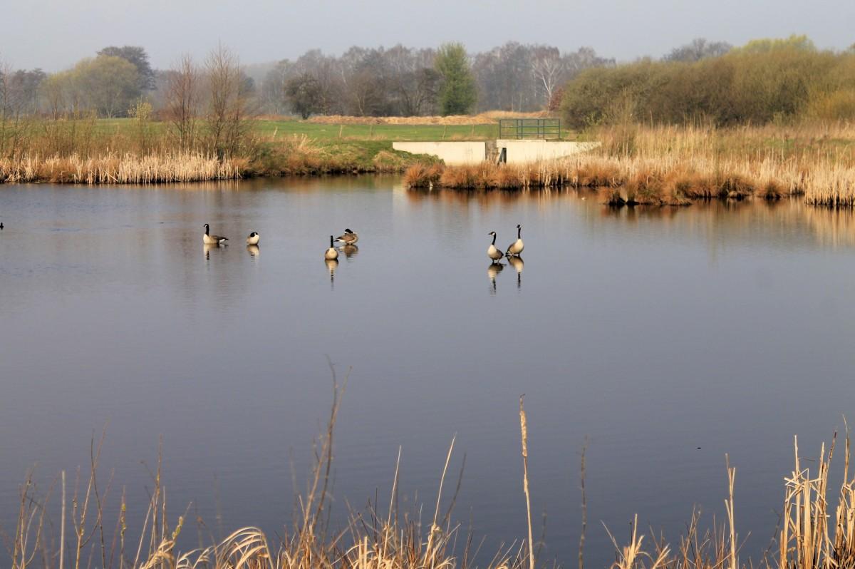 Gratis afbeeldingen landschap boom water natuur moeras vogel riet vijver wildlife - Riet voor struik ...