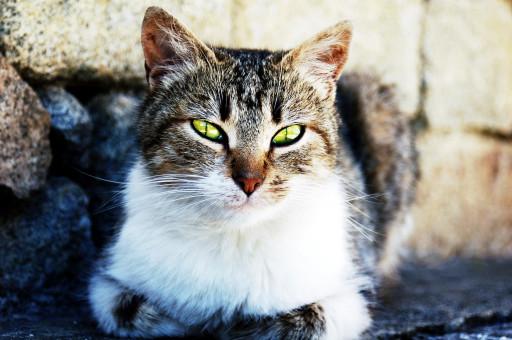 Natur,Tier,Haustier,Kätzchen,Katze,Porträt