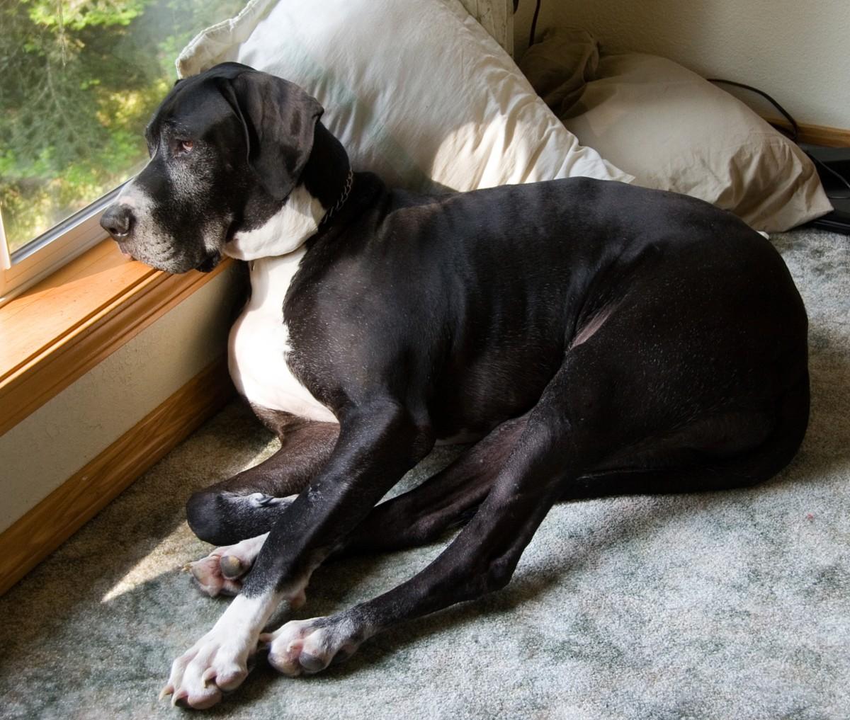 dog bone cancer - HD2048×1737