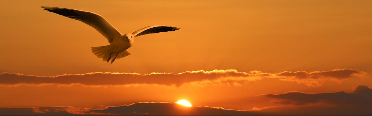 Free Images : bird, wing, cloud, sky, sun, sunrise, sunset ...
