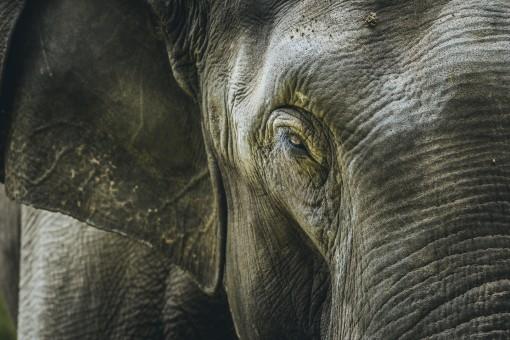 Images gratuites animal faune zoo mammif re l phant fermer image sympa il olympe - Photos d elephants gratuites ...