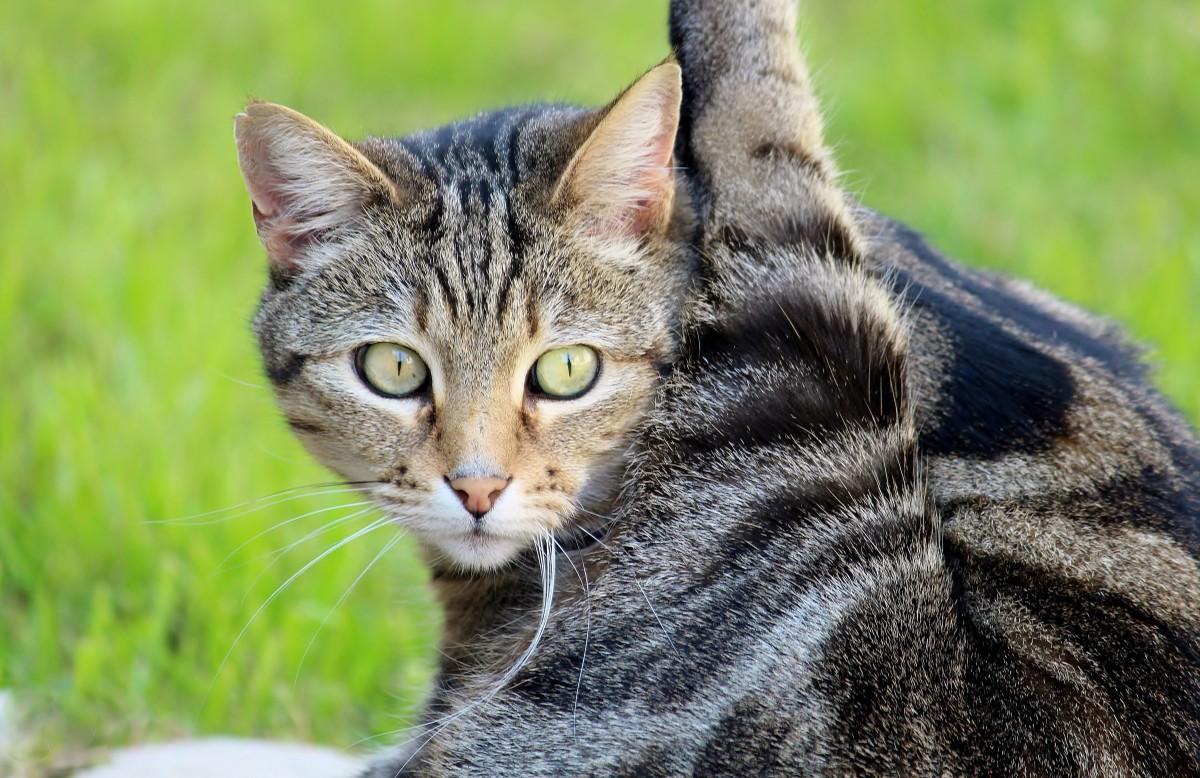 картинка домашнего животного кошка полностью прозрачный наряд