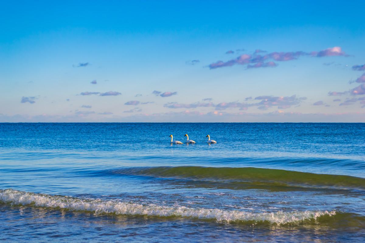 Gratis Afbeeldingen Dieren Aviaire Vogelstand Desktop
