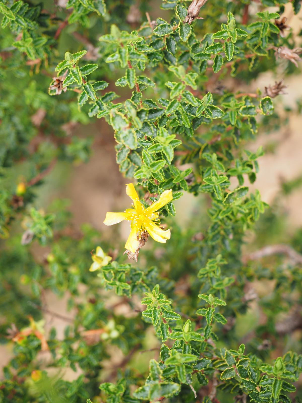 Images gratuites arbre branche fleur aliments for Plante 9 feuilles