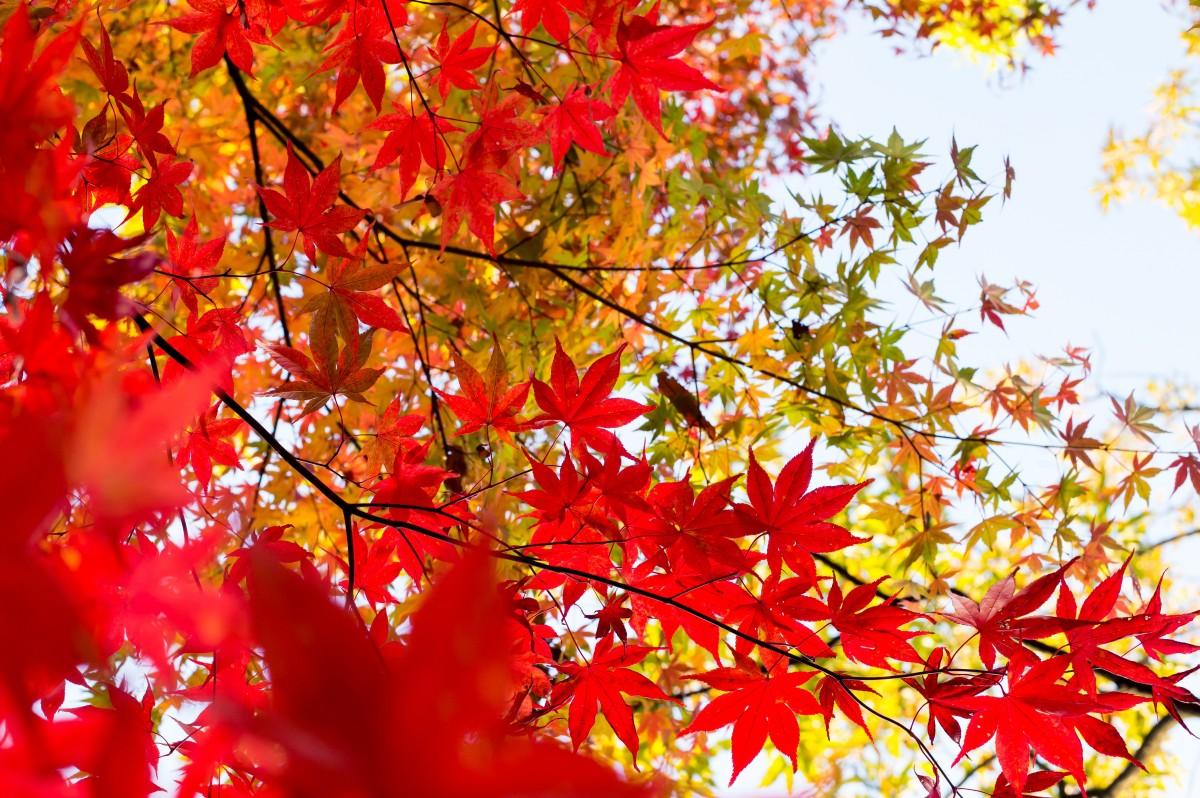 Осенние картинки красные