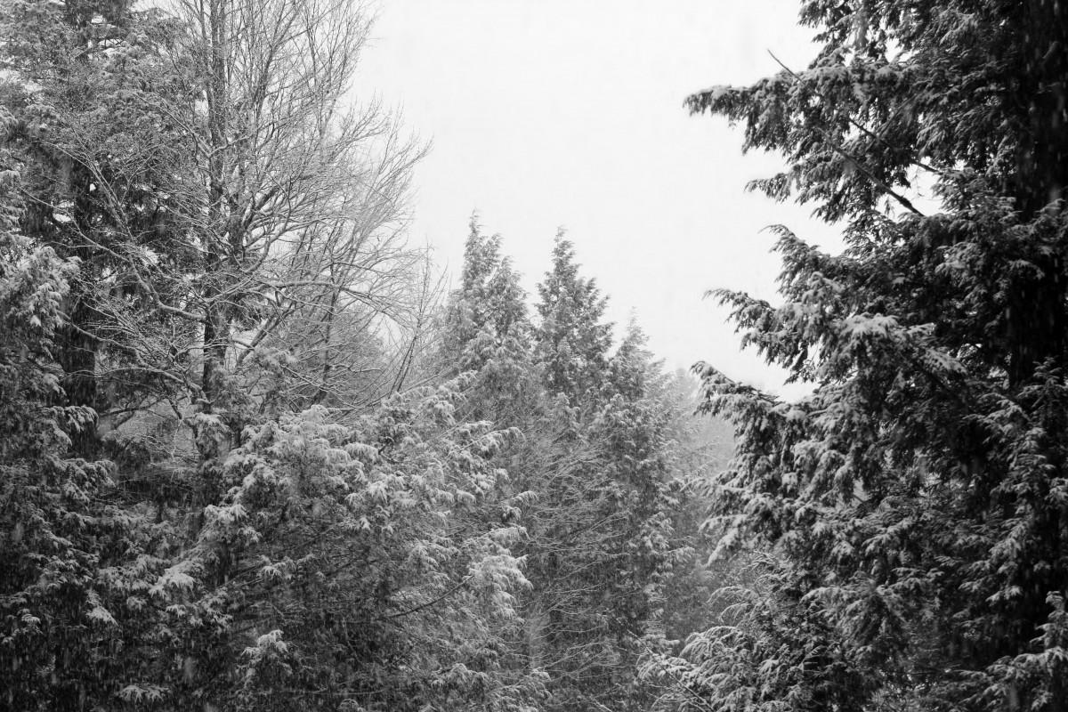 Fotos gratis rbol naturaleza bosque desierto rama for Arboles en invierno