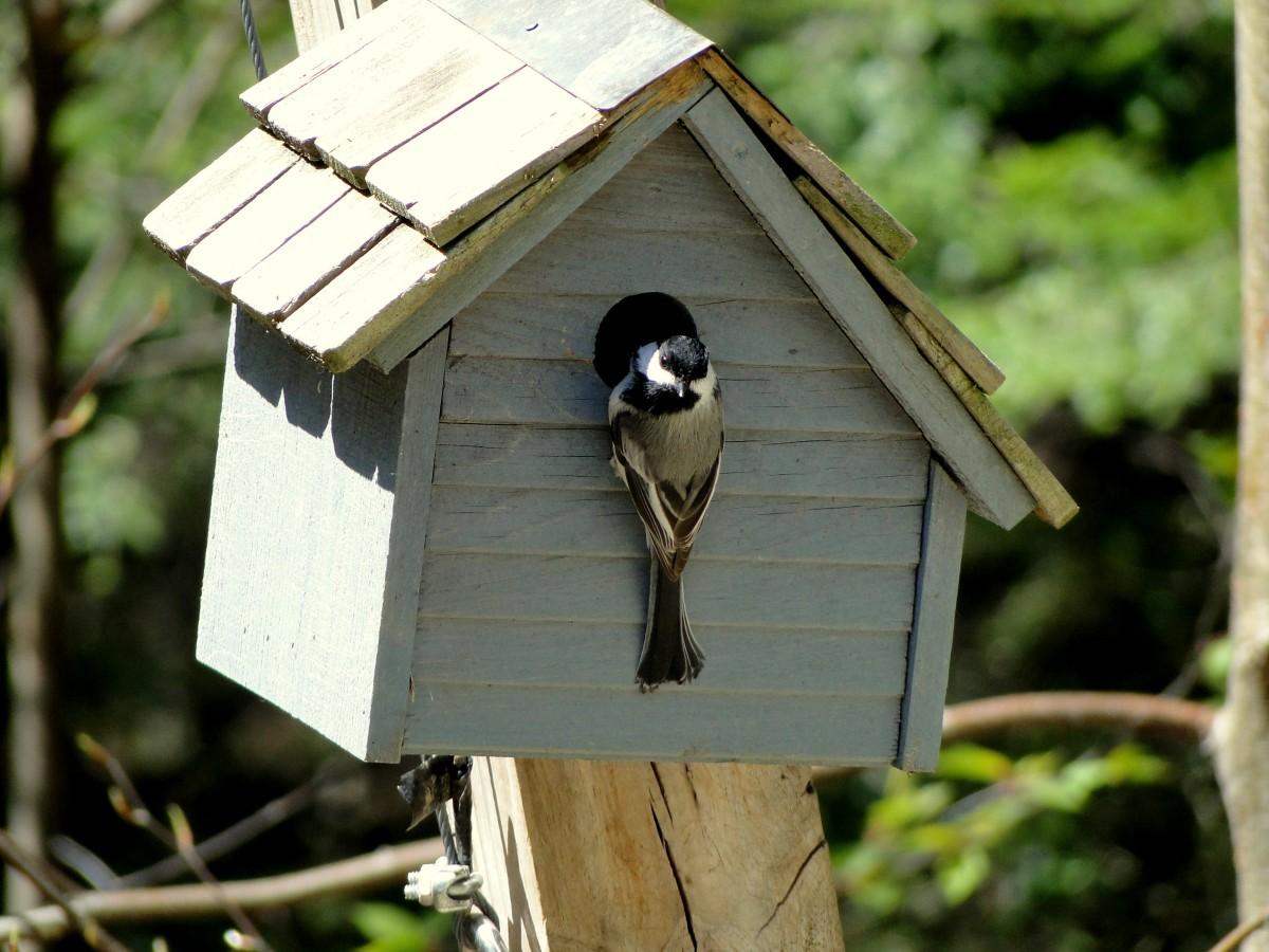 Скворечник птиц своими руками 648